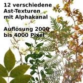 Pflanzen_Äste