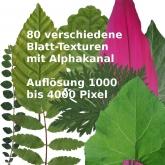 Pflanzen_Blätter