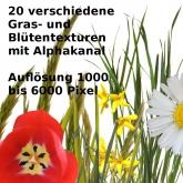 Pflanzen_Gras